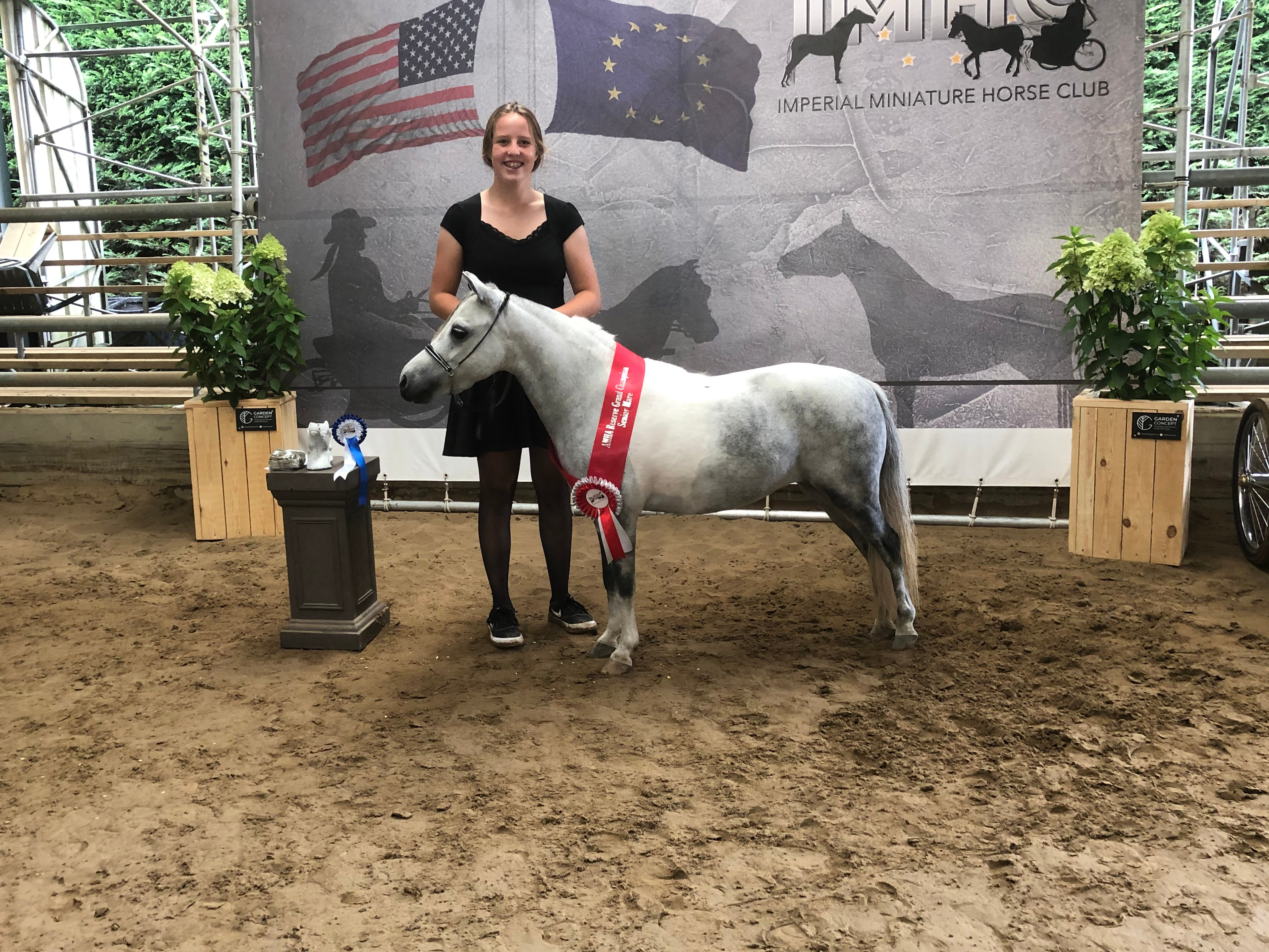 Hopkins An Image 2 Buzz About 2020 AMHA Reserve Grand champion Senior mares
