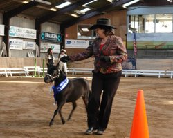 Veelvoudig kampioen Showmanship (Adult, Amateur, Youth)