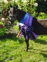 Veelvoudig Grand champion (kampioen der kampioenen) NL Moonlight Sampsons Babylonia (mare)