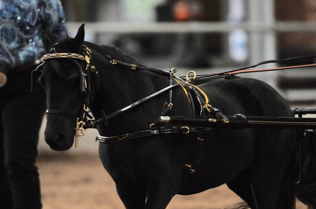 AA Creek Black Diamond Country Pleasure Driving Grand Champion